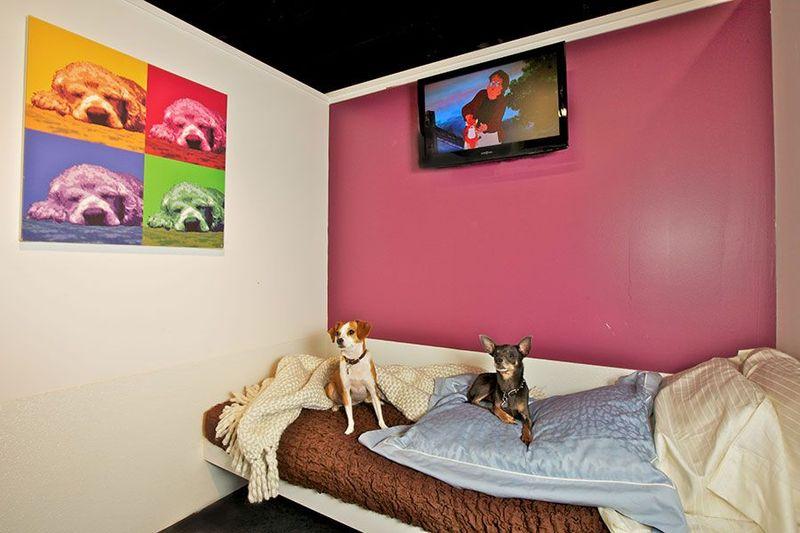Sebuah hotel bernama D Pet Hotels di Chelsea, New York jadi pengingapan khusus anjing. Yang bikin gemas, hotel ini juga siapkan berbagai layanan untuk memanjakan anjing. (dok D Pet Hotels)