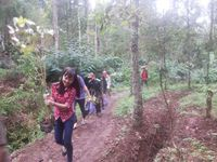 Bangun Startup Demi Lindungi Hutan Indonesia