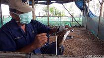 Kementan RI Sebut Flu Burung Masih Jadi Ancaman