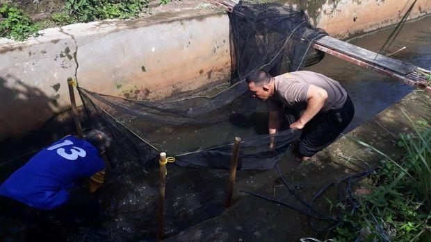 Kreatif! Selokan di Palembang Disulap untuk Ternak Ikan