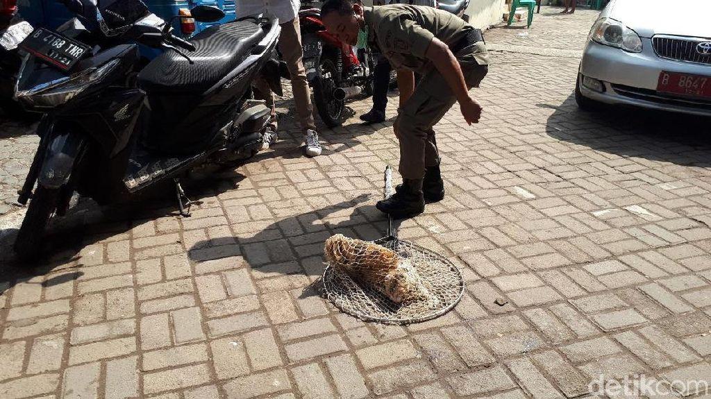 Viral ITS Bebas Kucing, Ada Juga Riset Sarankan Bunuh Kucing Demi Ekosistem