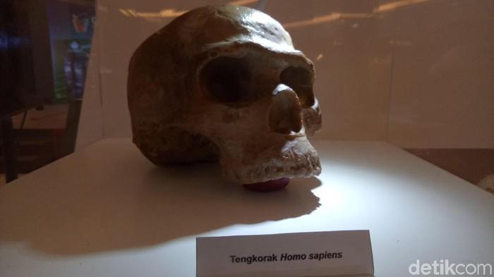 Foto: Berbagai fosil dan replika manusia purba di Mal OPI Palembang (Raja Adil Siregar/detikcom)