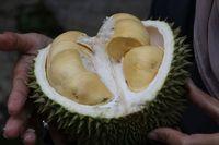 Pemerintah Malaysia Penasaran Soal Durian sebagai Makanan Afrodisiak