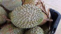 Dikira Gas Bocor, Bau Durian Busuk Bikin Ratusan Mahasiswa Australia Dievakuasi