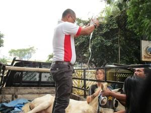 Patah Kaki, Kuda Delman di Menteng Akhirnya Disuntik Mati