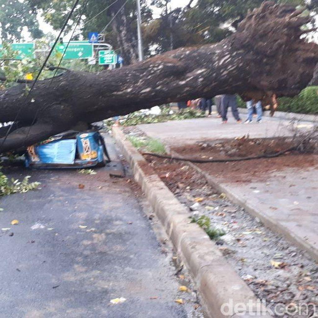 187 Pohon di Jakarta Tumbang Akibat Angin Kencang