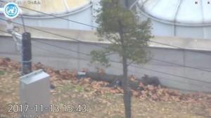 Dramatis! Pelarian Pembelot Korea Utara Terekam Kamera