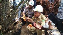 Liburan ke Riau, Bawa Buah Ini Sebagai Oleh-oleh