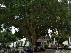 Pohon Gada Ini Hanya Ada di Tiga Tempat di Indonesia