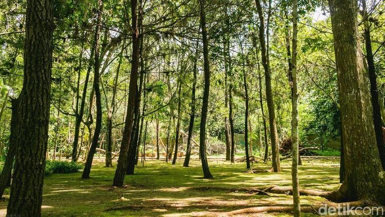 Ayo Rekreasi ke Hutan di Tengah Tangsel
