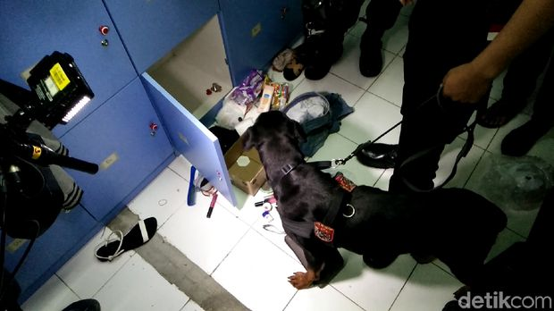 Ini Dora si anjing Rottweiler pengendus narkotika di kelab malam dan karaoke di Bekasi
