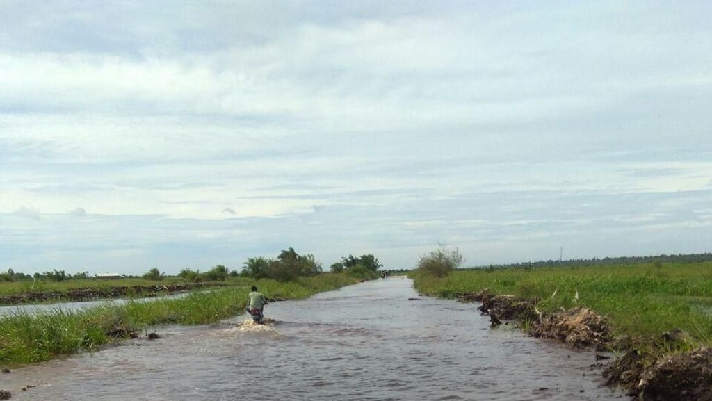 Banjir Terjang Kuansing Riau, 2.000 Ha Sawah Gagal Panen