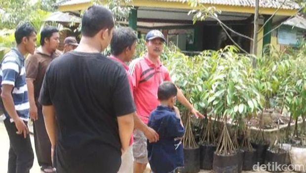 Bibit pohon durian Bhineka Bawor, Banyumas.