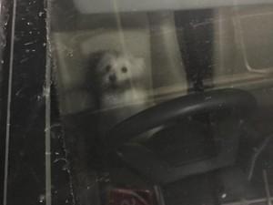 Cerita Tommy tentang Anjing Malang yang Ditinggal 8 Jam di Mobil