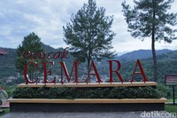 Objek wisata Puncak Cemara menjadi salah satu spot untuk melihat Sawahlunto dari ketinggian, begitu juga dengan papan Hollywood ala Sawahlunto (Randy/detikTravel)