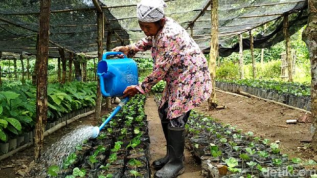 Barista Bule dan Kebun Kopi Peninggalan Belanda di Blitar