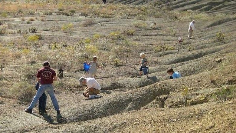 Wisatawan bisa menggali fosil di Mineral Wells Fossil Park, AS (Mineral Wells Fossil Park)