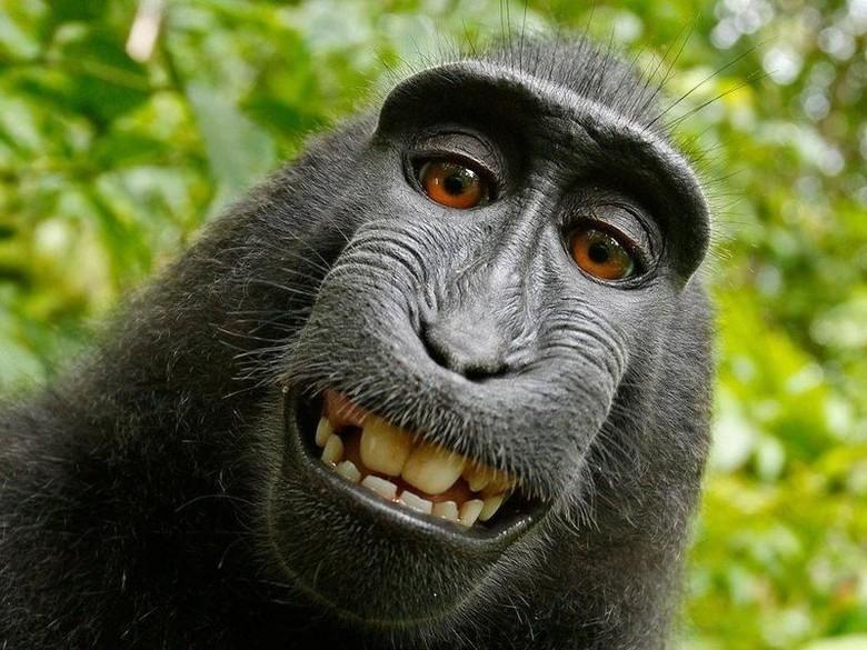 95+ Jenis Gambar Monyet Inspiratif