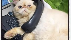 Terapi mental dengan menggunakan hewan peliharaan sudah bukan hal asing lagi. Kucing menjadi salah satu hewan favorit yang sering dijadikan terapis.