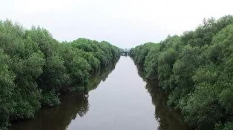 7 Cara Menikmati Hutan Mangrove PIK, untuk Libur Hari Rabu/Foto: (Nfadils/dTraveler)