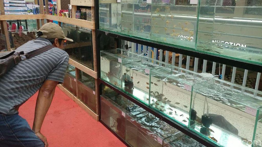 Berakhir Pekan Sambil Berburu Ikan Hias di Bandung