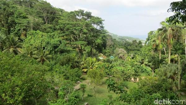 Le Jardin du Roi memiliki taman hutan 25 hektar dengan sekitar 95 spesies tumbuhan termasuk beberapa tumbuhan endemik asli Seychelles (Fitraya/detikTravel)