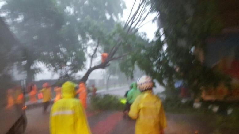 Hujan Angin di Jakarta, Pohon Tumbang di 5 Lokasi