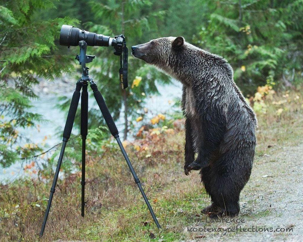 Aksi beruang hitam. (Foto: Boredpanda)
