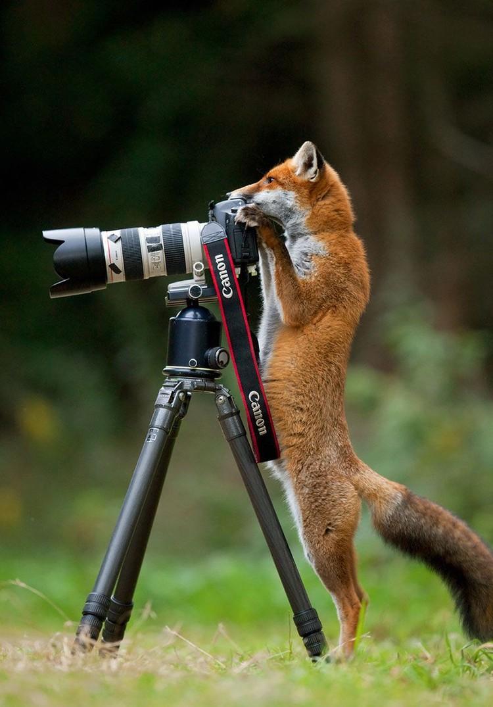 Tingkah Hewan Berprofesi Fotografer Bikin Ngakak Foto 17