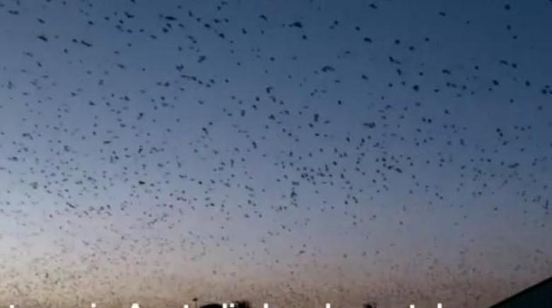 Kota Ini Mendadak Diserang Ratusan Ribu Kelelawar
