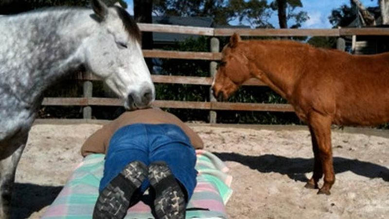 Di Australia, terdapat spa menggunakan kuda. Pada Free Rein Australia, kuda-kuda bertugas memijat pelanggan dengan moncongnya. Pada treatment ini, para pelanggan berbaring di tempat tidur pijat di lapangan. Kuda-kuda memutuskan sendiri akan memijat siapa dengan moncongnya (CNN Travel)