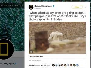 Beruang Kutub Sekarat karena Kelaparan Kejutkan Netizen Dunia