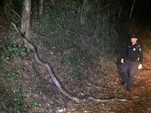 Viral Foto Polisi Temukan Ular Piton 5 Meter Saat Patroli Malam