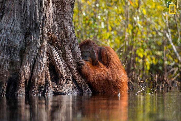 Foto: National Geographic/Jayaprakash Joghee Bojan