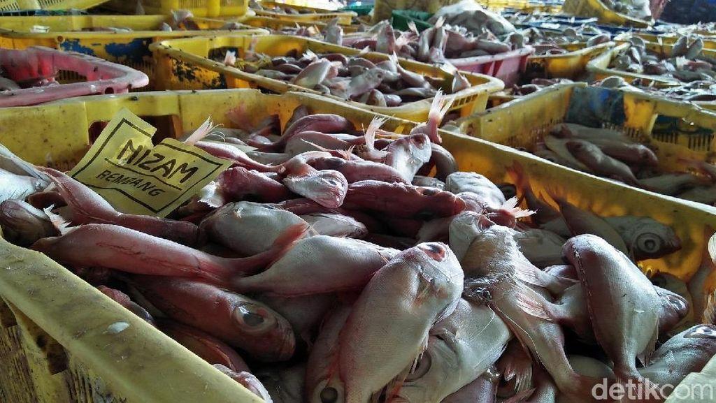 Bu Susi, Ikan Kalah Populer Dibanding Ayam