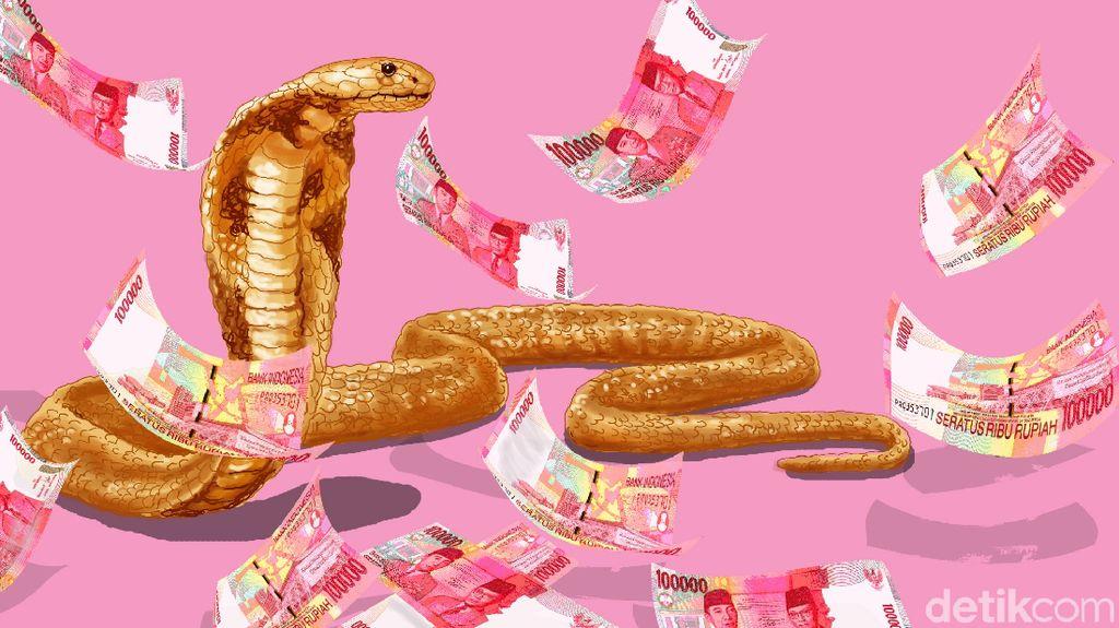 Untung Besar karena Kobra
