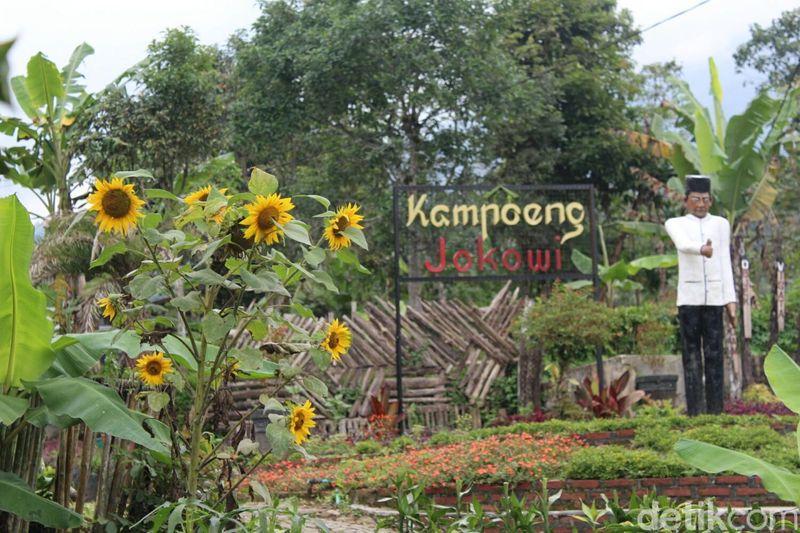 Kampoeng Jokowi ada di Perkebunan Teh Nusantara VIII Dayeuhmanggung, Kecamatan Cilawu. Awalnya bernama Kampung Cipinang, namun diubah menjadi Kampoeng Jokowi karena terinspirasi oleh kesederhanaan Presiden RI ke-7 itu (Hakim Ghani/detikTravel)