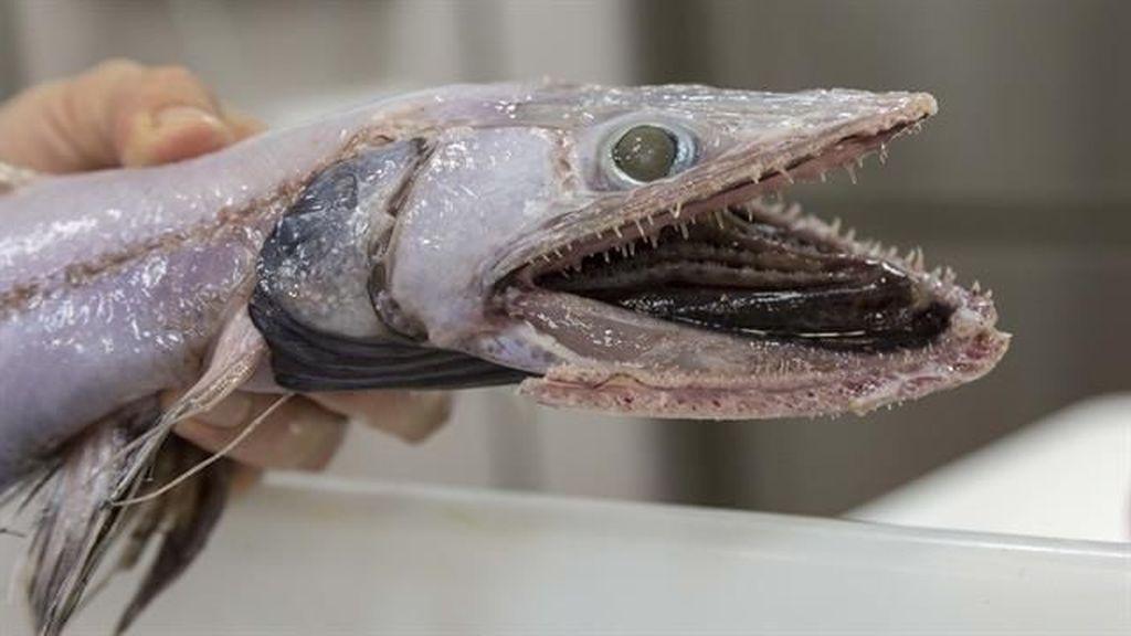 Temuan Makhluk Laut Paling Aneh 2017