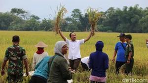 Pupuk Organik Bantuan Bupati Ipong Naikkan Hasil Panen Petani