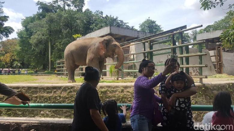 95 Koleksi Gambar Binatang Gajah Dan Jerapah Terbaik