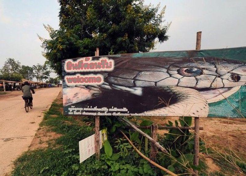 Ban Kok Sa-Nga berada di Thailand, tepatnya di Provinsi Khon Kaen yang berjarak sekitar 50 km dari pusat kotanya. Desa ini dijuluki Cobra Village alias Desa Kobra (CNN)