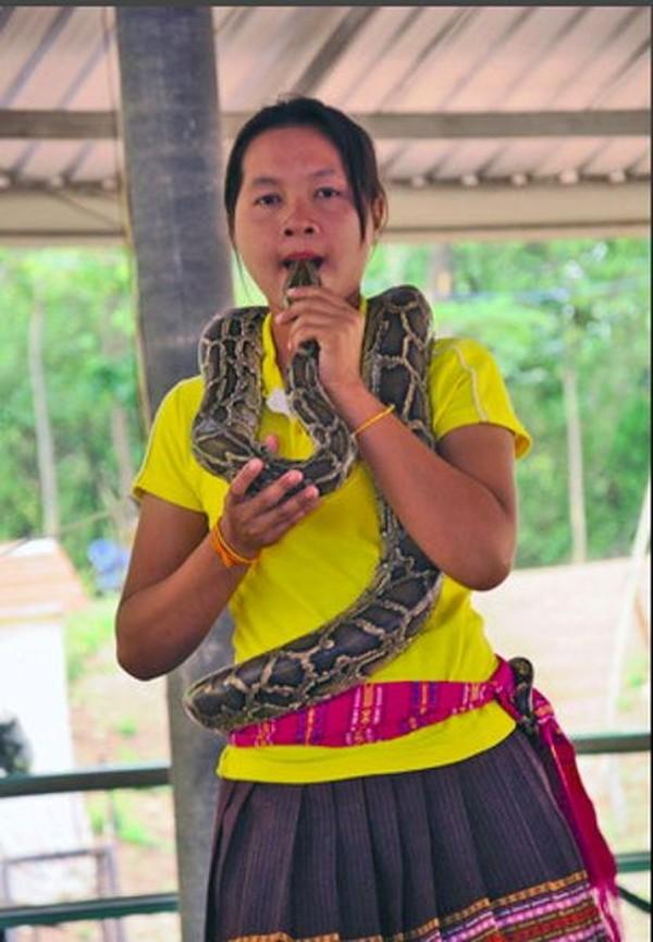 Awalnya, mereka mau menghidupkan desa dengan pertunjukan ular kobra. Lewat pertunjukan seperti itu, tentu mereka bisa menghasilkan uang. Namun seiring berkembangnya zaman, hal tersebut sudah tergerus. Tapi tetap saja, memelihara ular sudah menjadi hal yang biasa dan terus dilakukan oleh tiap generasi (CNN)