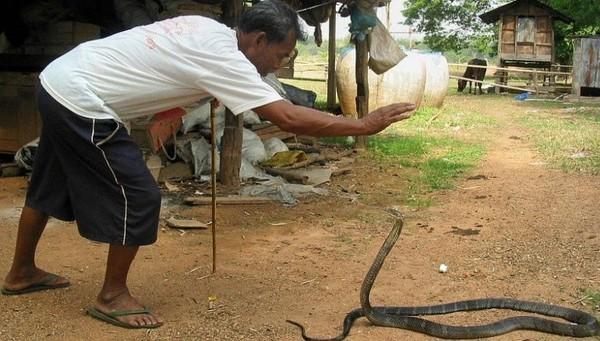 Berani datang ke Desa Kobra di Thailand ini? (CNN)
