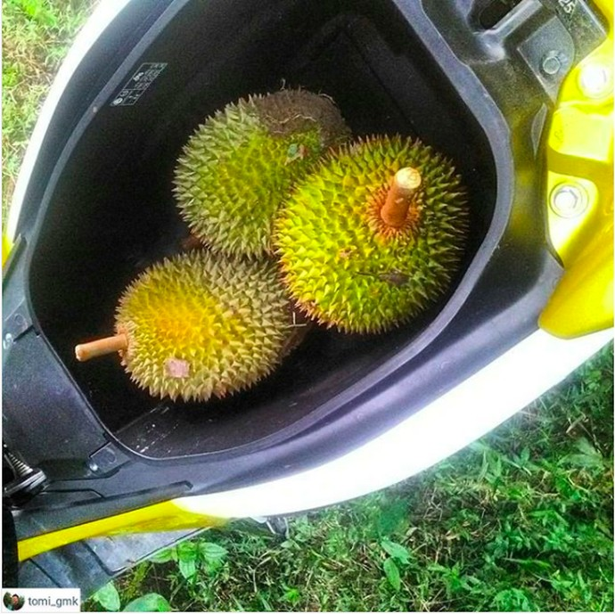 Bagasi Yamaha Nmax Berubah Fungsi untuk Pelihara Ikan, Dll