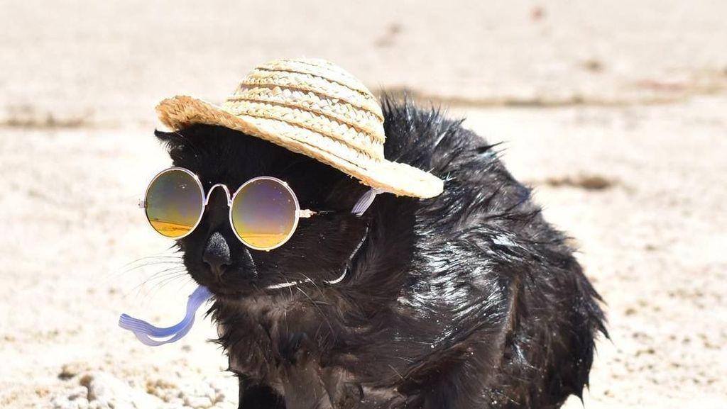 Nathan, Kucing yang Suka Pantai