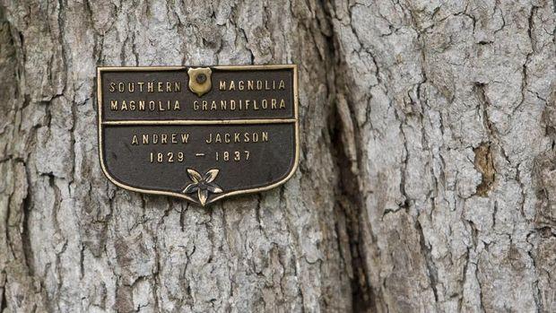 Kisah Pohon Tua di Gedung Putih, Saksi Kampanye Keji di AS