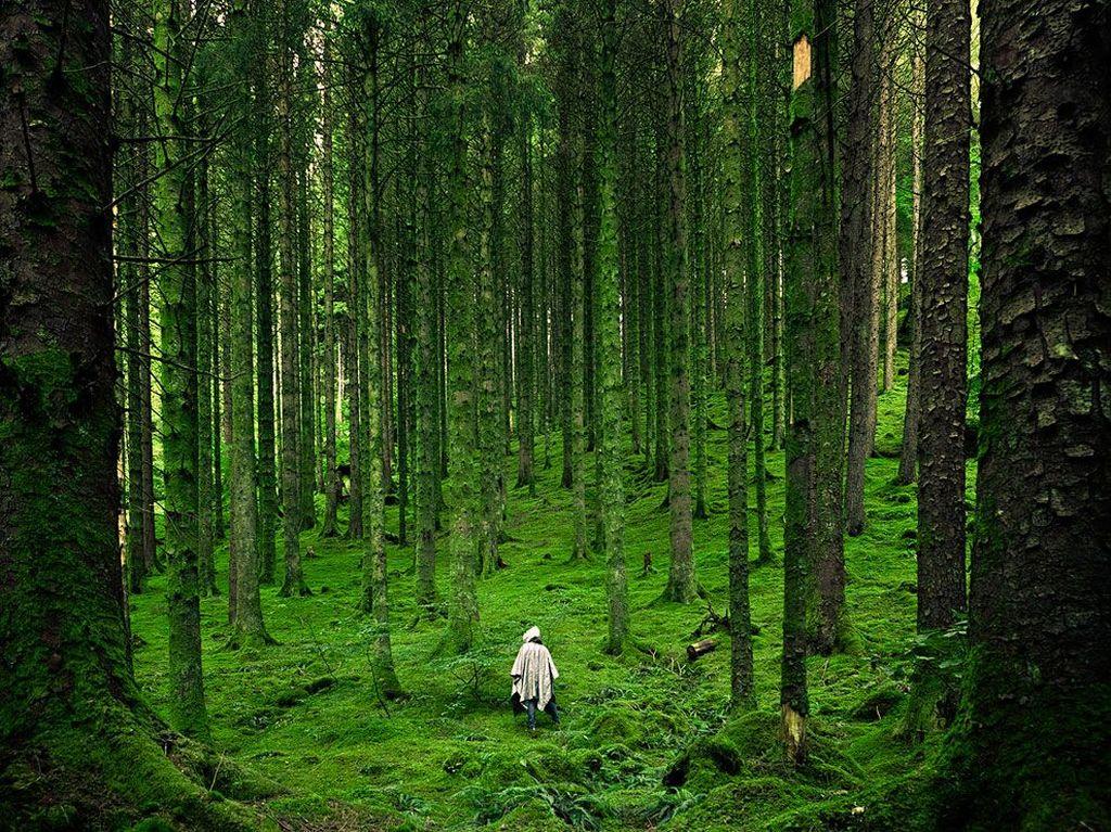Hutan akan berisi pohon-pohon yang tumbuh dengan sudut kemiringan sangat tajam saat posisinya semakin menjauhi titik tengah bidang datar, karena gaya gravitasi menariknya ke arah bawah dan juga pusat Bumi jika planet ini berbentuk datar. Foto: Internet