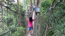Ini Jembatan Kanopi yang Keren di Kalimantan