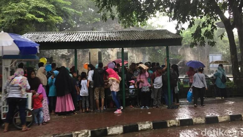 Hujan Deras, Pengunjung Ragunan Berlarian Cari Tempat Berteduh