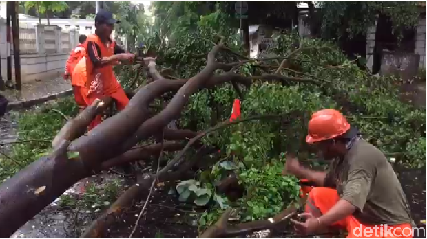 Pohon tumbang di Menteng, Jakpus, Minggu (31/12/2017)